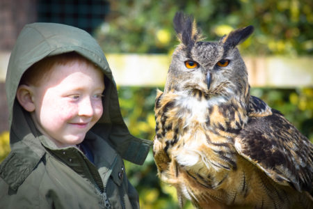 sonny-and-owl